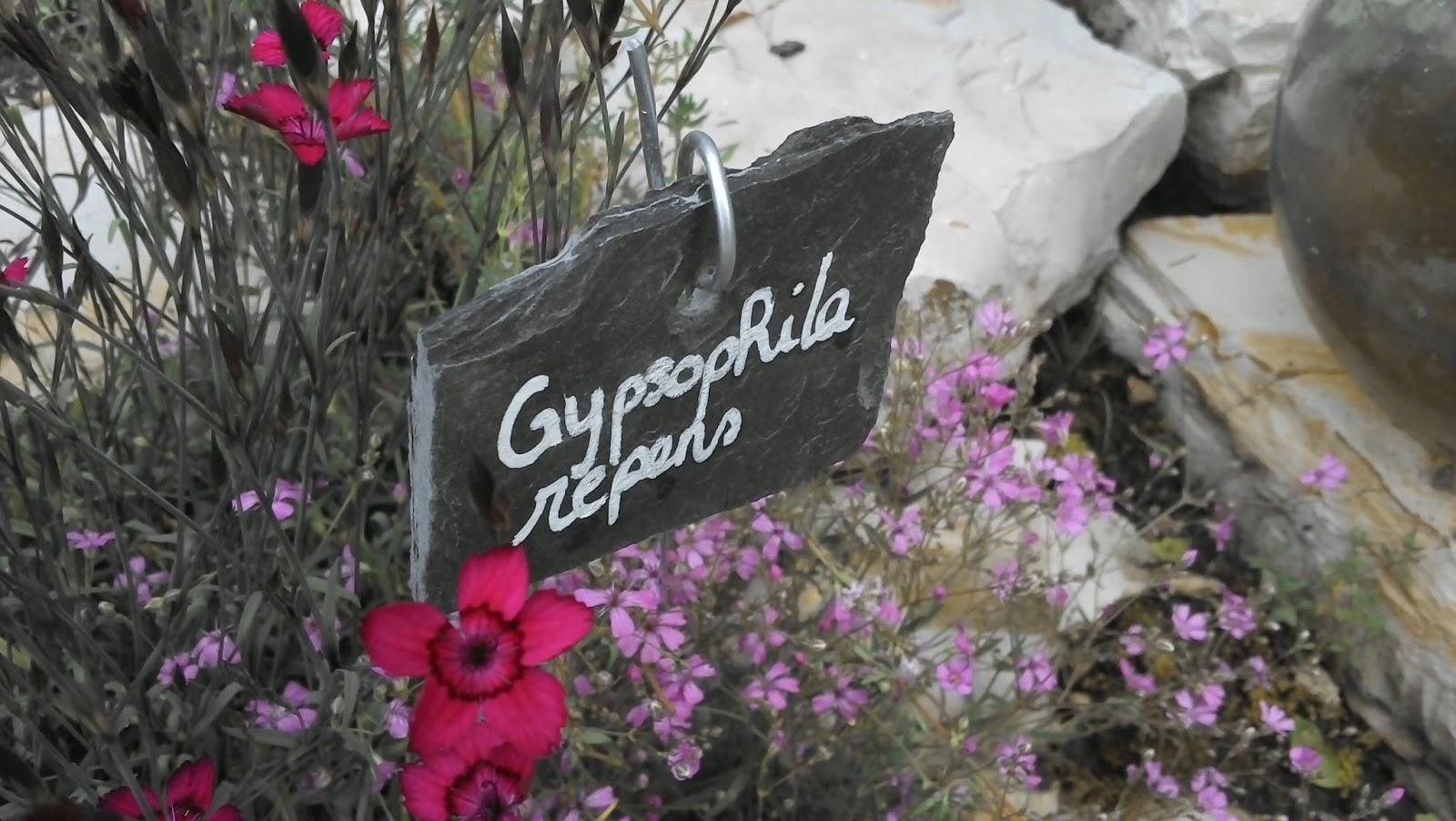 Rue rivoirette jardin quelles plantes pour une ambiance - Quelles plantes pour jardin zen ...