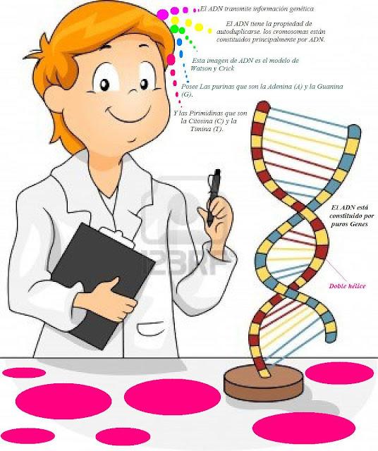 Capacidad de mutación: justificando los cambios evolutivos.