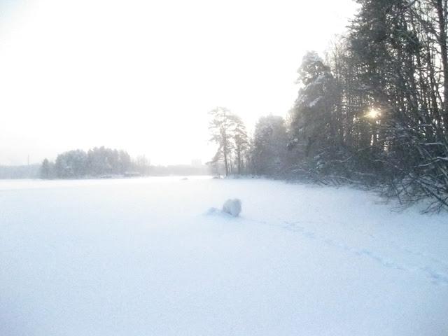 talvimaisema Jyväskylä
