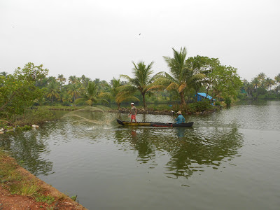 Cherai backwaters, Kerala backwaters