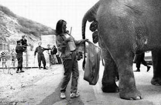 funny picture of a woman who cleans elephant turd