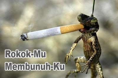 foto lucu hewan merokok