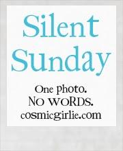 http://www.cosmicgirlie.com/2013/12/22/silent-sunday-43/