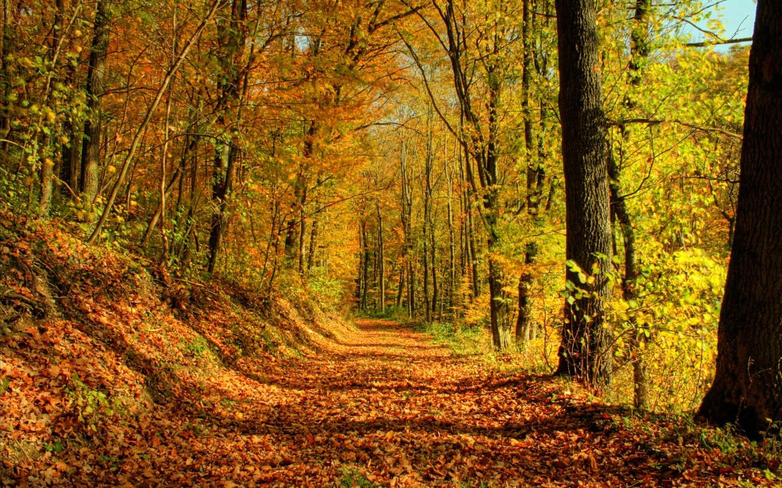 The best top autumn desktop wallpapers 37 En Güzel Sonbahar HD Duvar Kağıtları