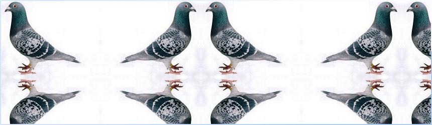 Gołębie Pocztowe PZHGP