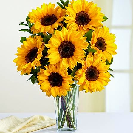 Sunflower radince