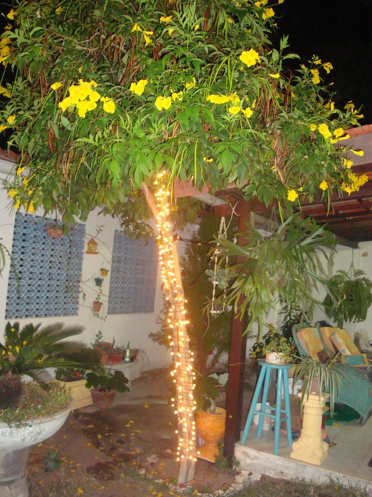 ipe de jardim familia: de ipê, e ficou bem legal, as luzes de natal deixam os jardins e