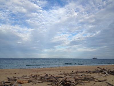 Lambert's Beach Mackay, with driftwood