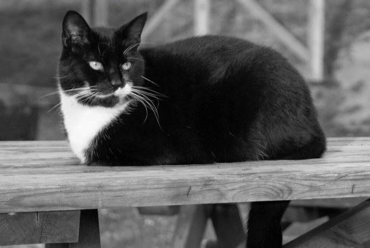 A final few black and white photos