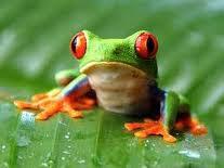 Worried frog
