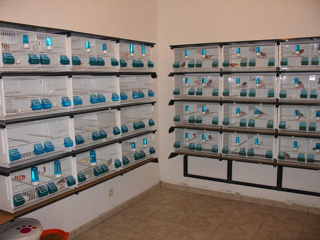 Canarios pfreixo vendo viveiros terenziani modelo cilea 6030 - Modulos de canarios ...