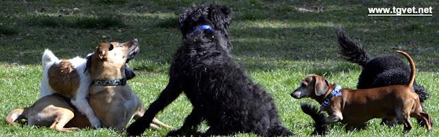 artrosi-cane-anziano