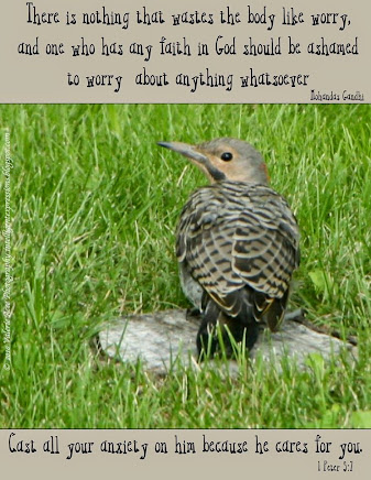 This Northern Flicker is saying to YOU:  Quit Worrying!!!