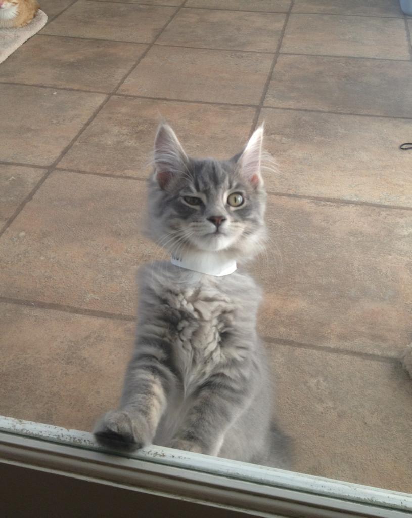 cat pictures, cat photos,