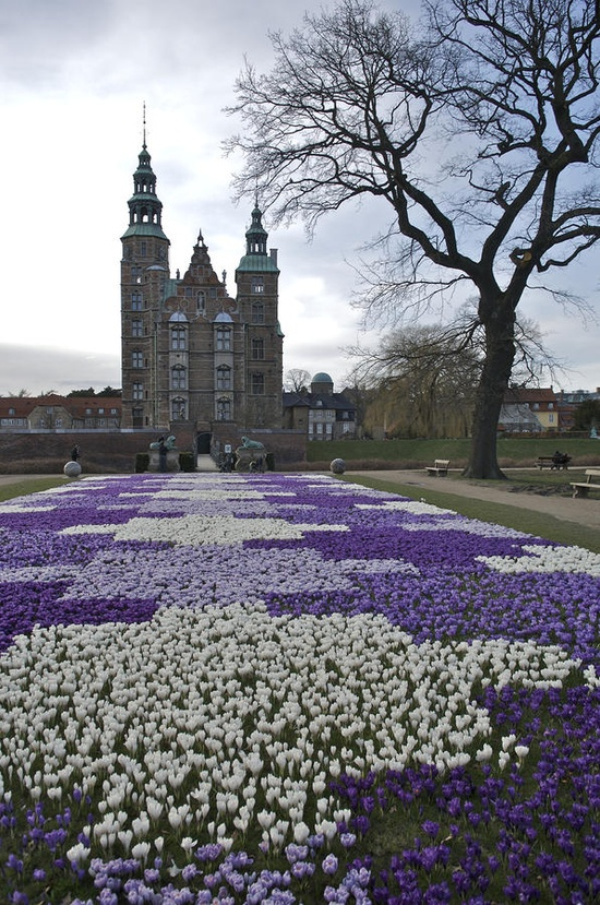 Denmark, Copenhagen - Crocus Bloom