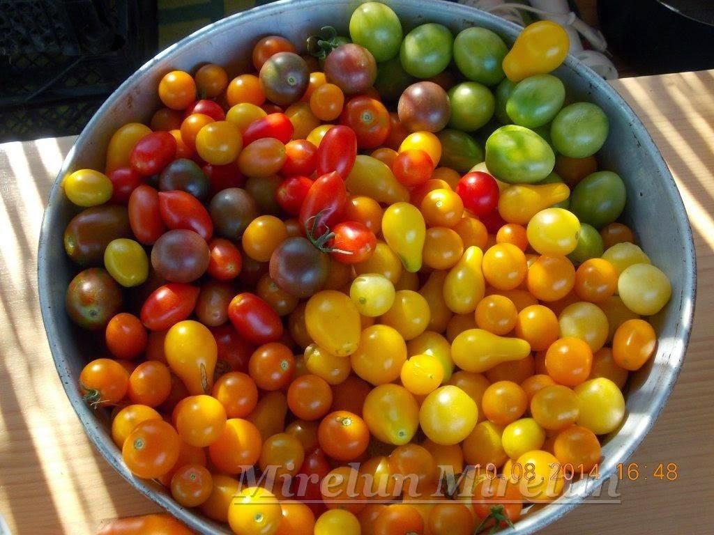 Colecția cherry