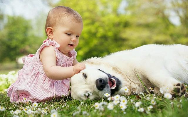 Baby and animals  2