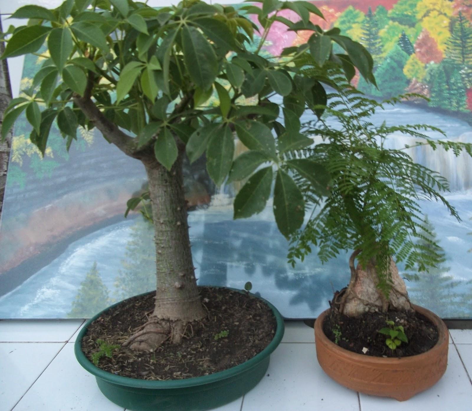 Marzo 2014 jardin de casa for Como cultivar bonsais