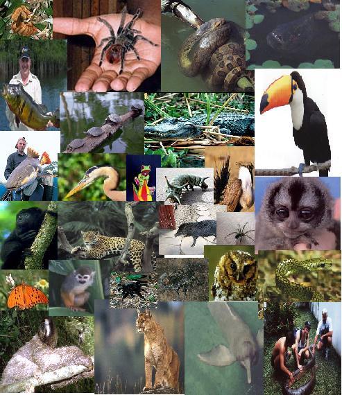 external image fauna+2.jpg