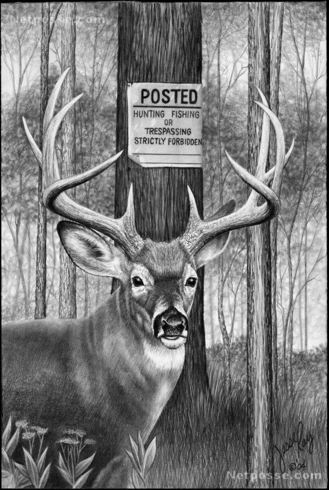 Deer Hunting Drawings Deer Drawings Whitetail