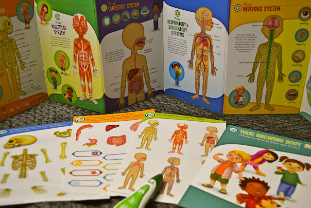 Tag Interactive Human Body Discovery Pack