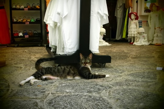 Eivissa Ibiza cat