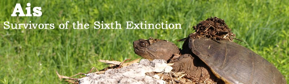 Ais: Survivors of the Sixth Extinction