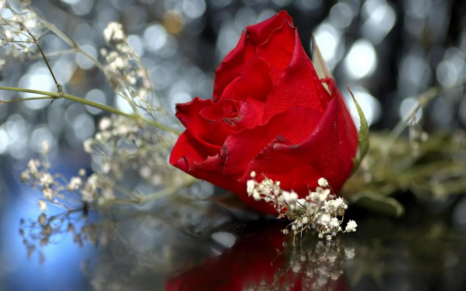 http://1.bp.blogspot.com/-3bd9xQ0yJck/T1wD7N-g_uI/AAAAAAAAADc/54INoVcYzJY/s1600/Wedding_red_rose_hd_wallpaper.jpg