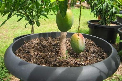 backyard plants ideas backyard trees backyard landscaping backyard