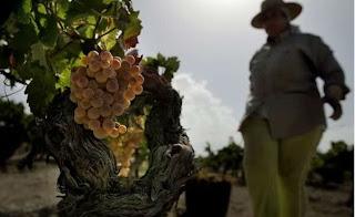 Spain Farmer