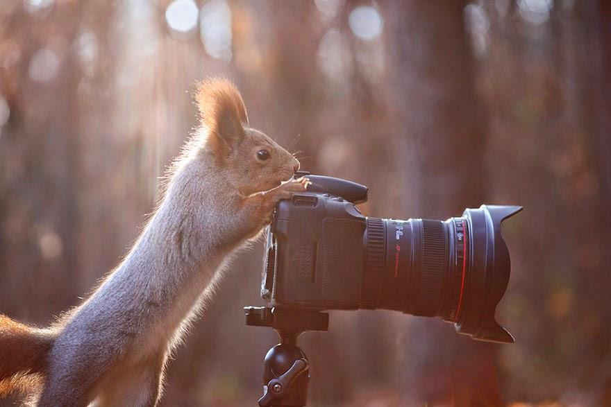 adorable squirrel photos vadim trunov-3