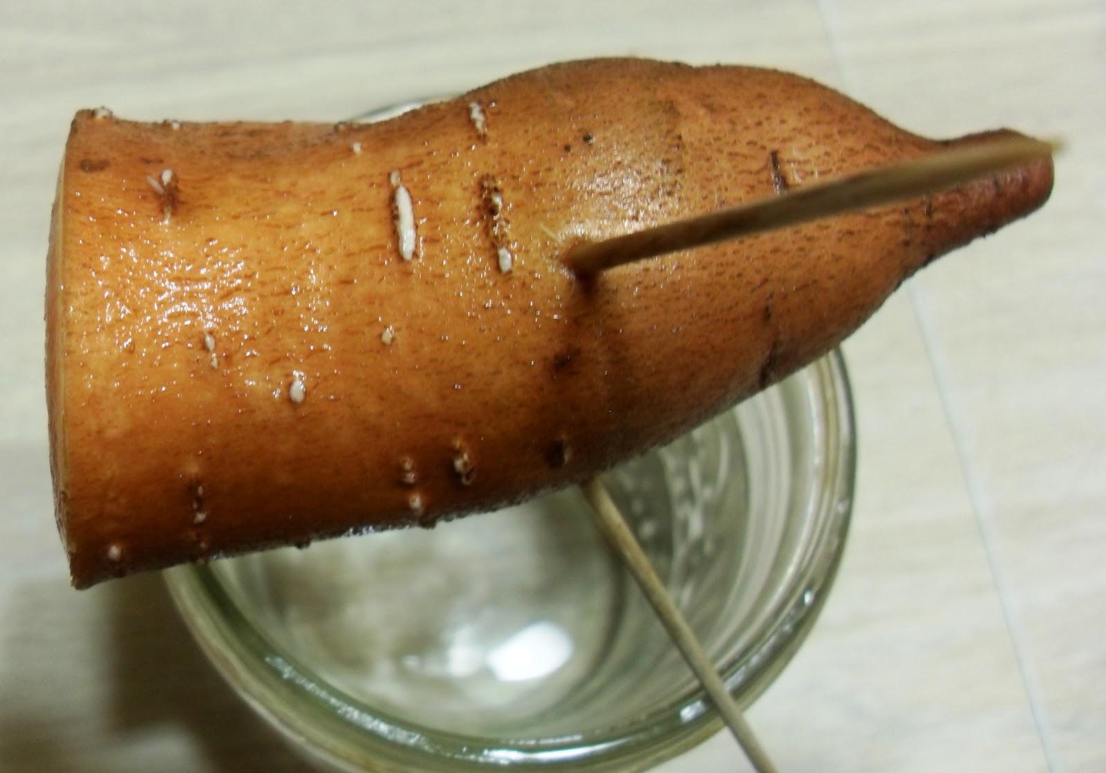 The Scientific Gardener Starting Sweet Potatoes
