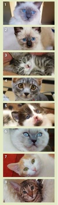 quiz kucing jantan atau betina
