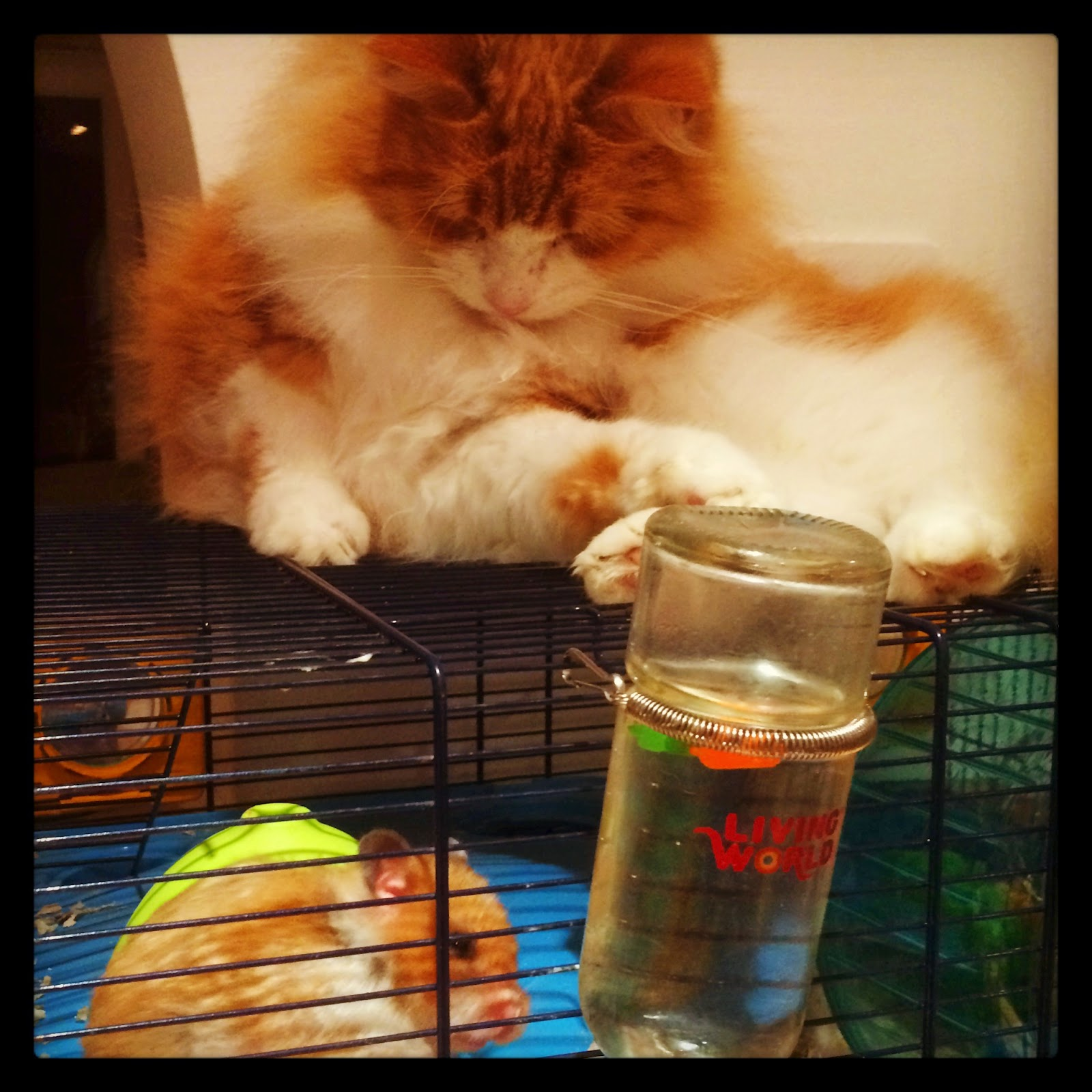 odd couple- cat and hamster