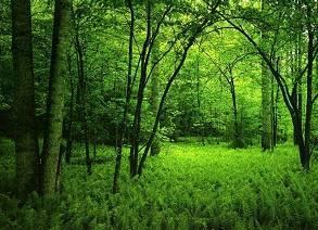 Hutan belantara
