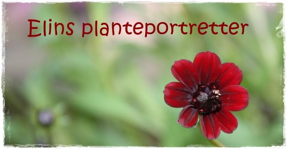 Elins planteportretter