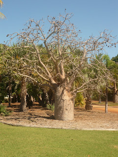 Boab Tree, Courthouse in Broome - Own Image