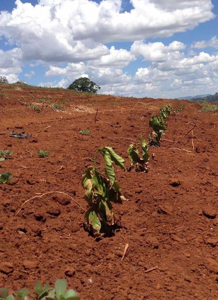 Calor e seca no Brasil nada têm a ver com  aquecimento global e outros mitos ecologistas