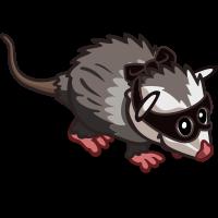 Bandit Opossum