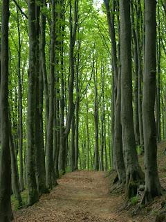 Italia: foreste di Camaldoli