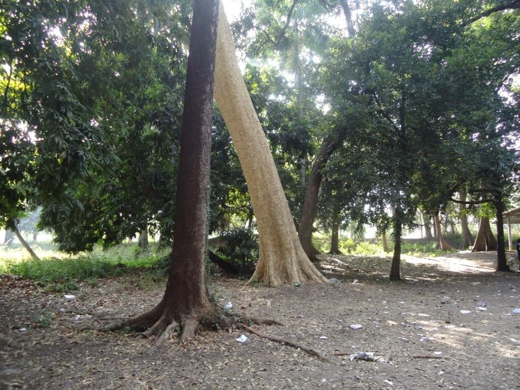 Trees, Pune, garden