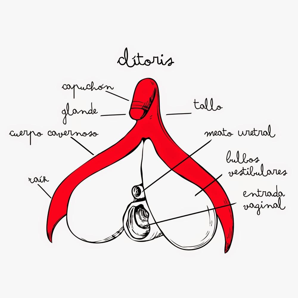 Clitoris images clitoris photo