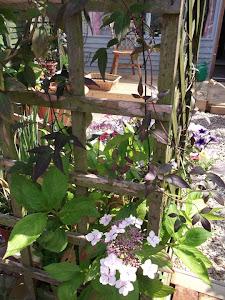 A peek though the trellis ...