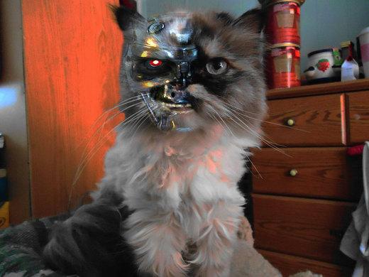 Terminator Cat T-800 por alaimotony