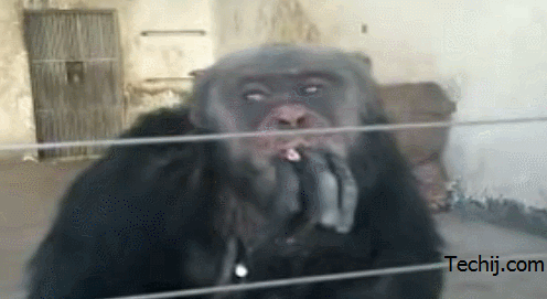 monkey smoking cigarettes