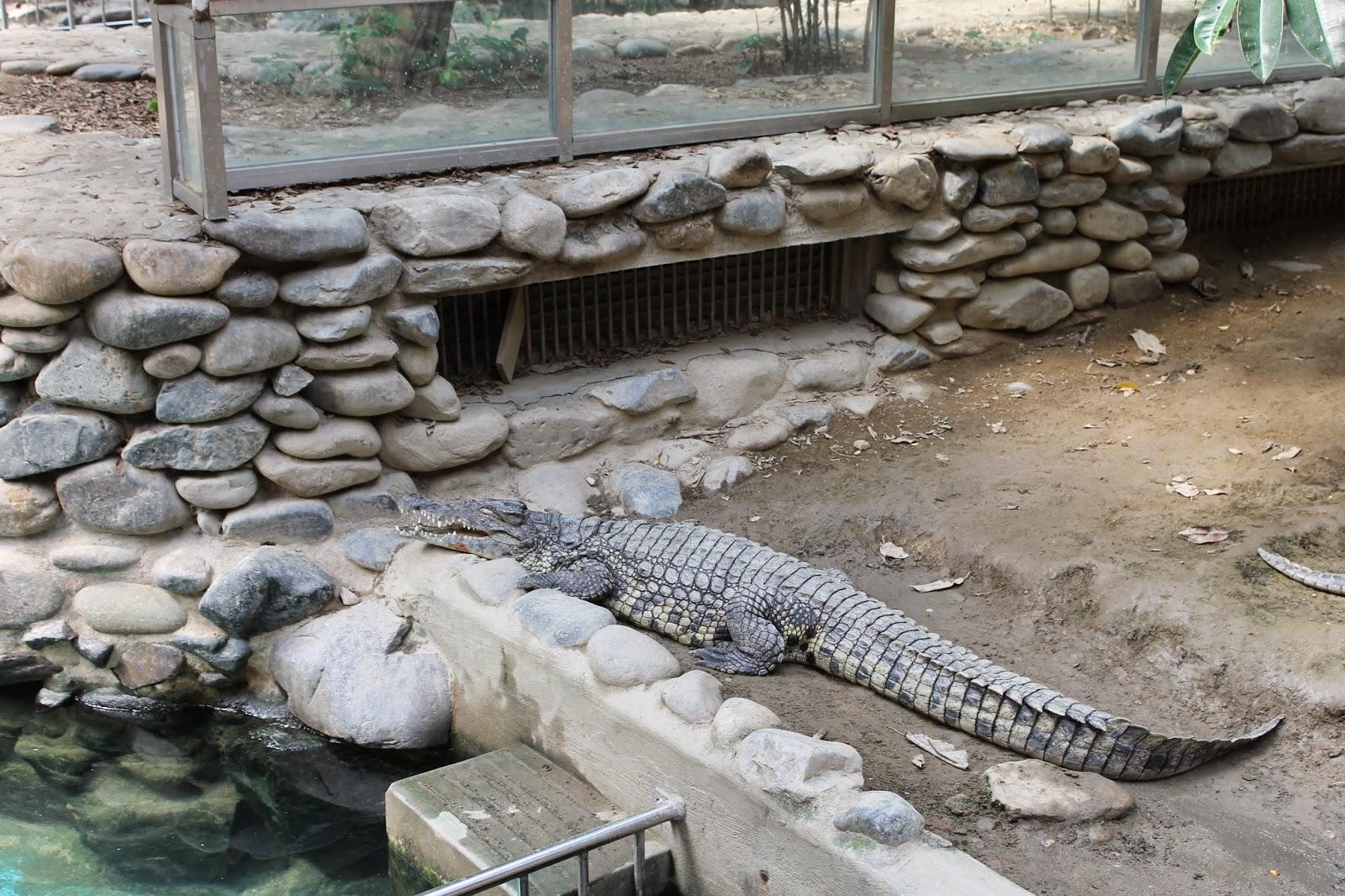 Seoul Zoo, Seoul, зоопарк в сеуле, сеул, корея, зоопарк, крокодил