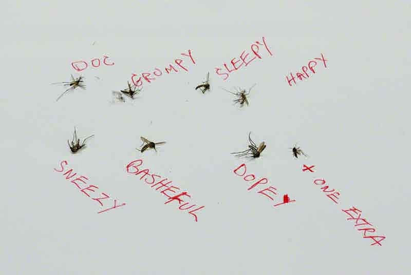 dead mosquitoes with names