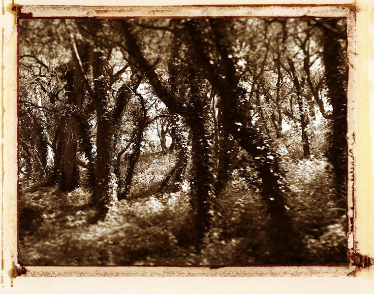 Oléron forêt Boyardville