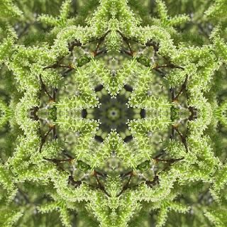 Gopher Killing Plants Fab Fabrications--Kale...