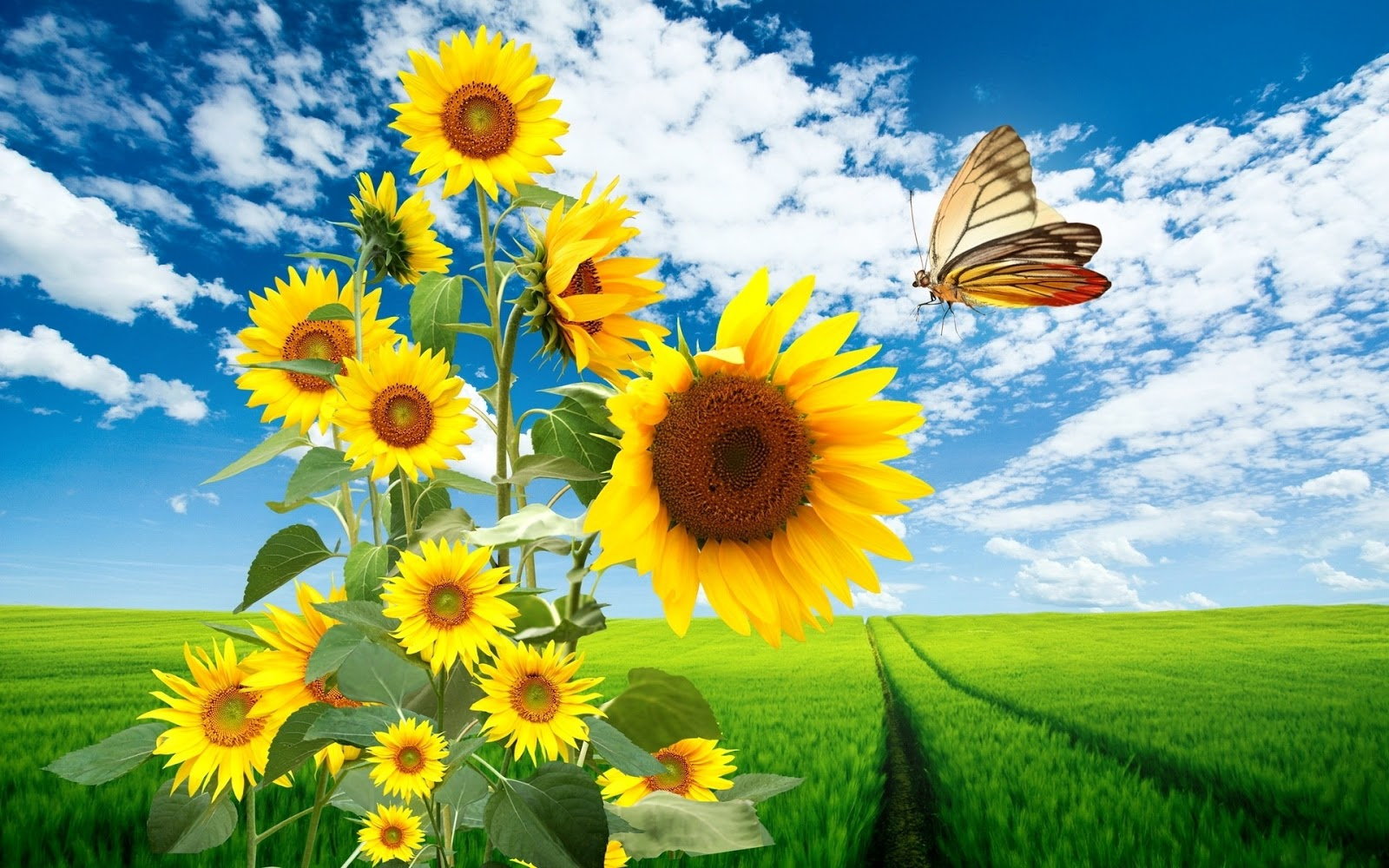 hdwallpapers of butterflies wild life
